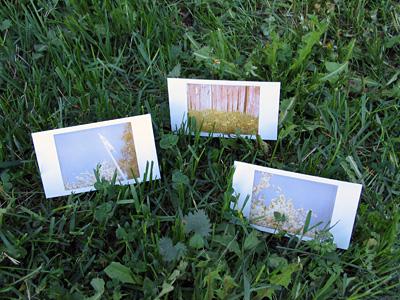 Polaroid x 3