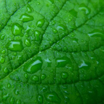 Sataa, sataa, ropisee