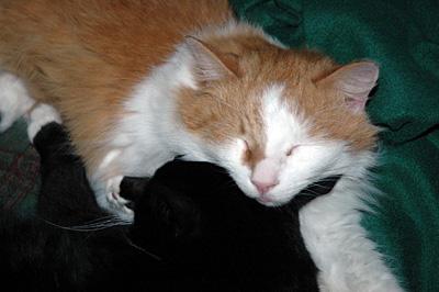 Kissat unimaailmassa