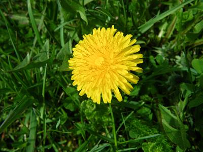 Kevään merkki