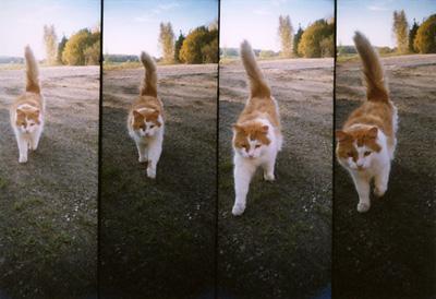 Miska syksyllä 2005