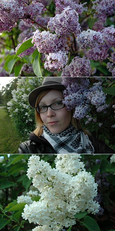 Kukkia jälleen