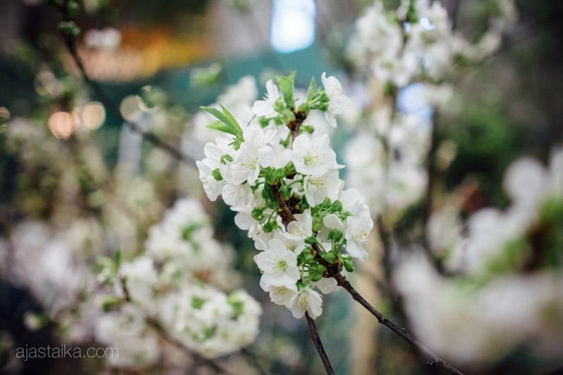 Piha & Puutarha -messuilla kukkii