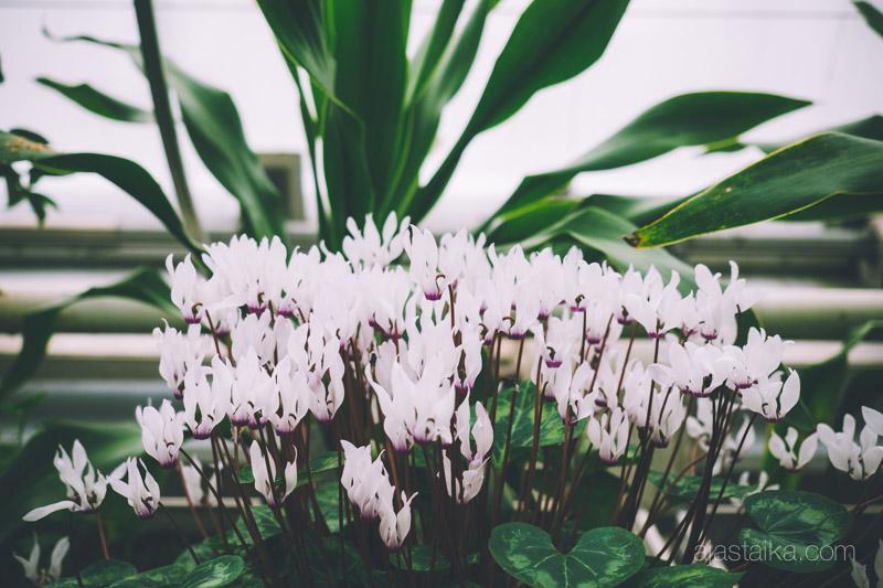 Kukkakasa