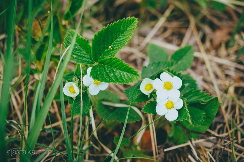 Maan tasalla kukkii myös