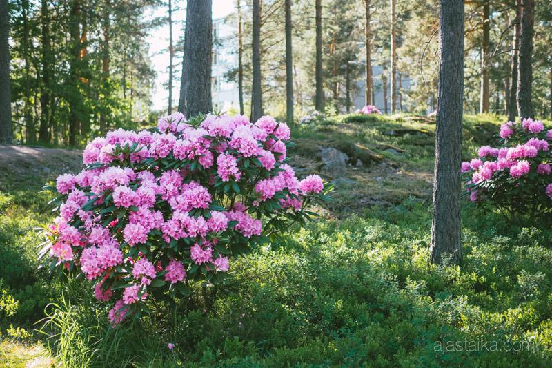 Kukkaa piisaa