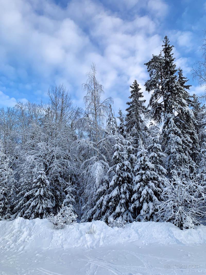 Ihana luminen tammikuu