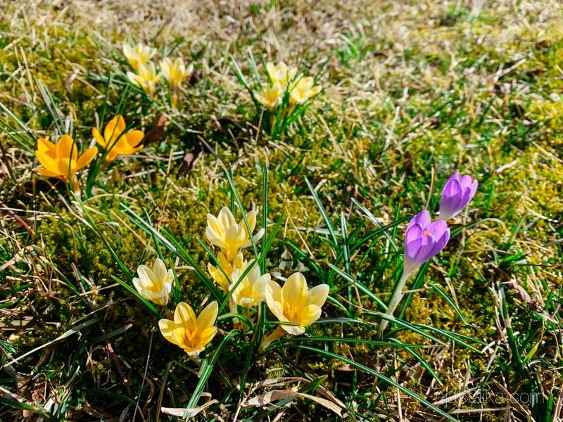 On siis kevät